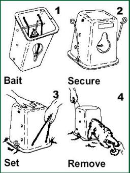 Timm trap for possums