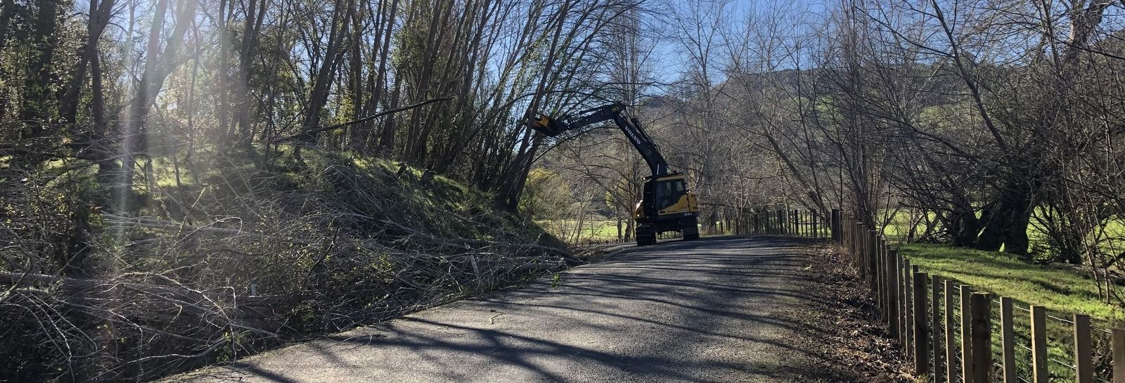 tree removals banner image