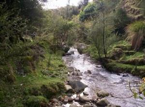 A healthy riparian zone