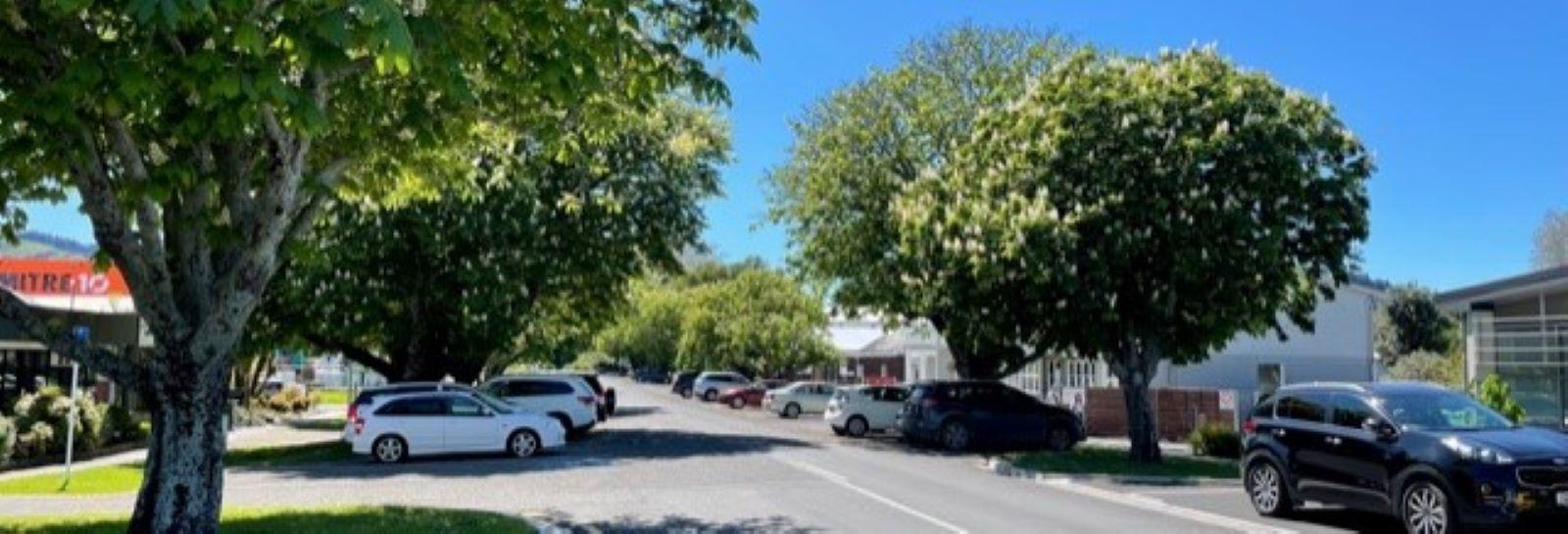 Chestnut trees banner image