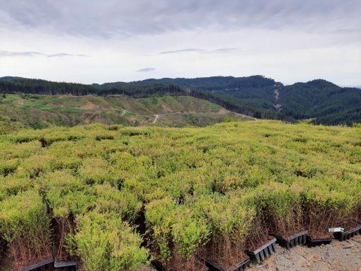 Waingake planting
