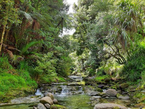 Waingake bush